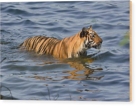 Tigress Of The Lake Wood Print