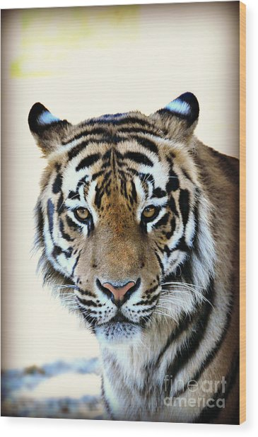 Tigris Wood Print