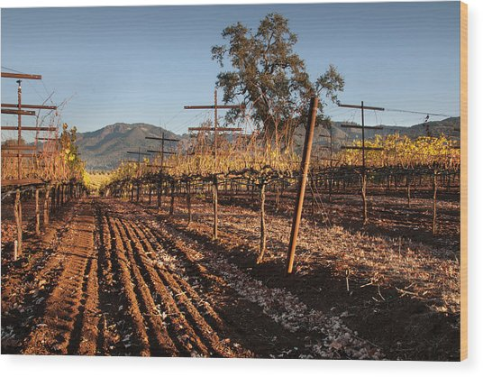 Tilling The Vineyards Wood Print by Kent Sorensen
