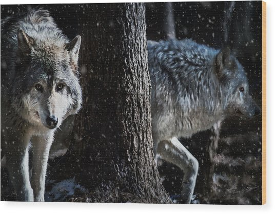Timber Wolves In The Snow Wood Print