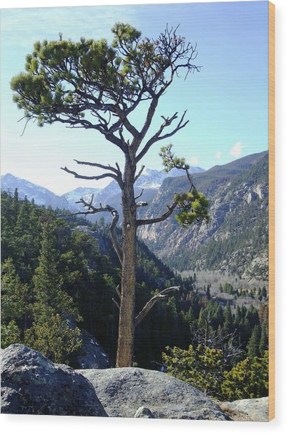 Timberline Tree Wood Print by Stephen Schaps