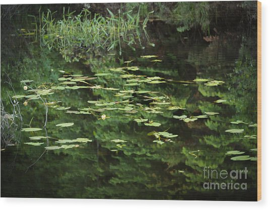 Time For Reflection Wood Print