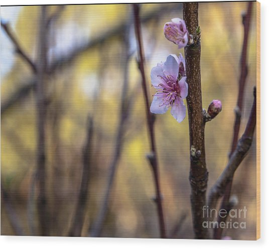 Time To Bloom Wood Print by Serene Maisey