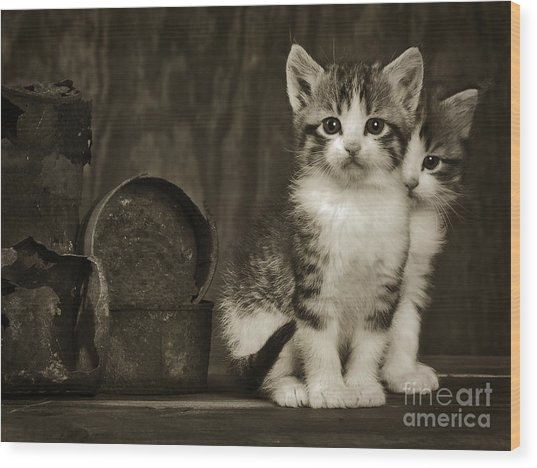 Tin Can Alley Cats  Wood Print