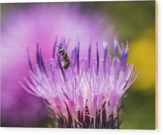 Tiny Dark Bee On Texas Thistle Wood Print