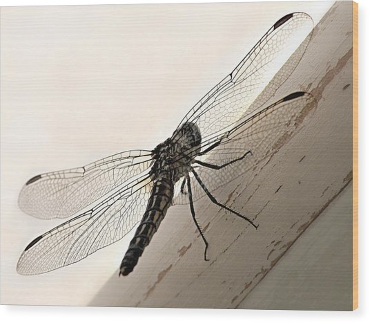 Tiny Magnificence  Wood Print