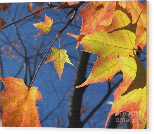 Tiny Sugar Maple Leaves Aglow Wood Print