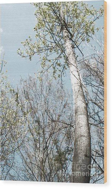 Wood Print featuring the photograph Tip To The Top by Angelique Bowman