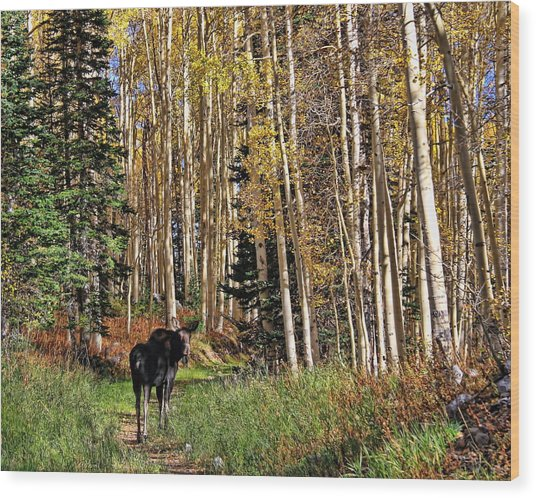 To Hike With A Moose Wood Print by Gene Praag