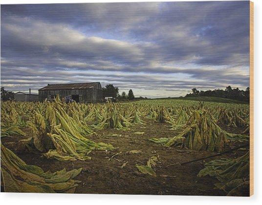 Tobacco Road I Wood Print