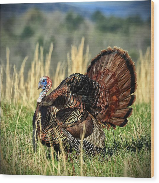 Tom Turkey Wood Print