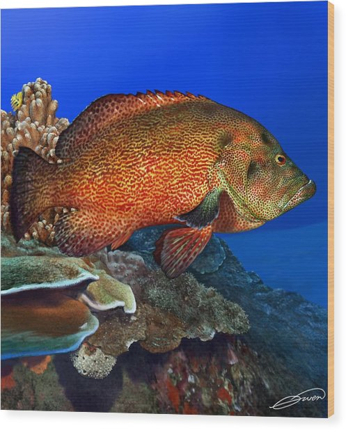 Tomato Grouper Wood Print by Owen Bell