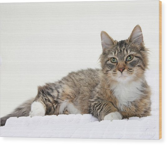 Too Cute Tabby  Wood Print