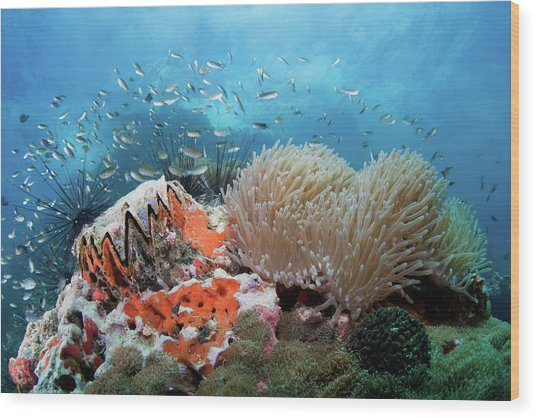 Toothy Reef Wood Print by Nature, Underwater And Art Photos. Www.narchuk.com