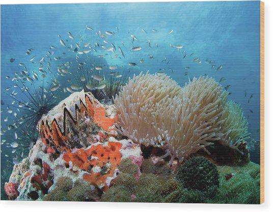 Toothy Reef Wood Print