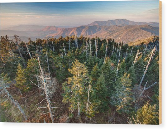 Top Of The Dome Wood Print by Scott Moore