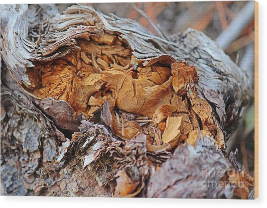 Wood Print featuring the photograph Torn Old Log by Ann E Robson