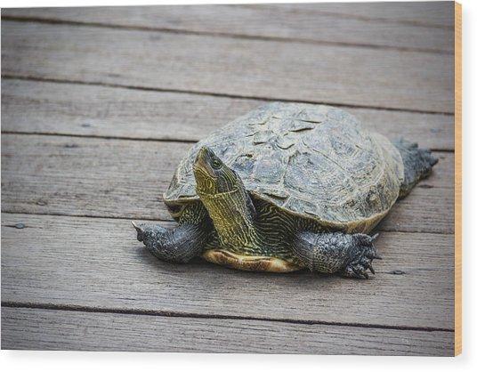 Tortoise On A Wooden Bridge Wood Print
