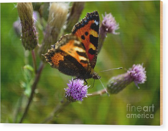Tortoise Shell Butterfly Wood Print