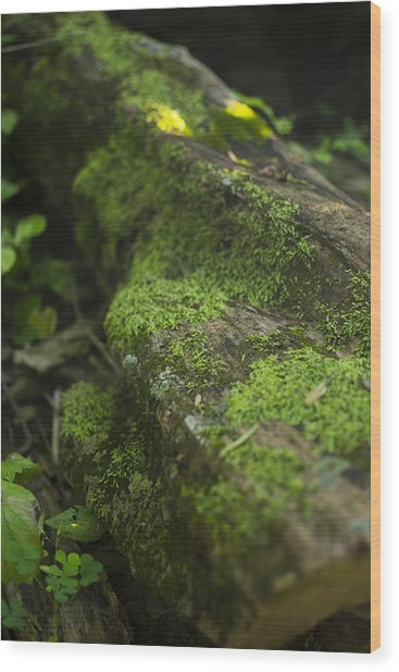 Touched By Nature Wood Print by Michael Williams