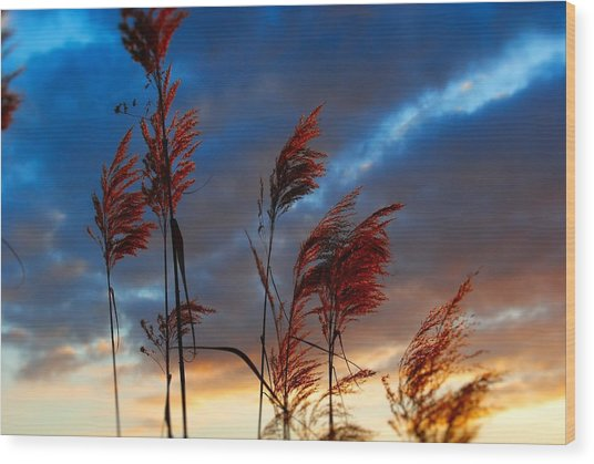 Touched By The Sunset Wood Print