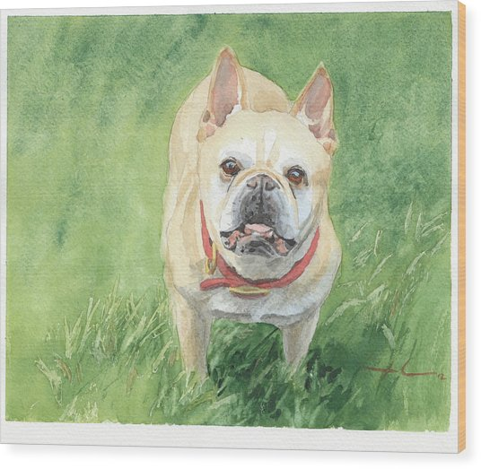 Tough Little Dog Watercolor Portrait Wood Print by Mike Theuer