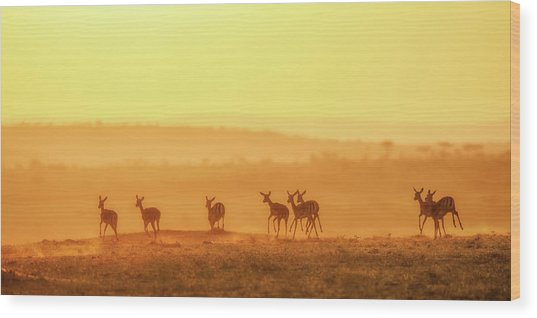 Towards Sunset Wood Print by John Fan