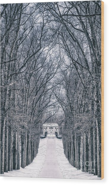 Towards The Lonely Path Of Winter Wood Print