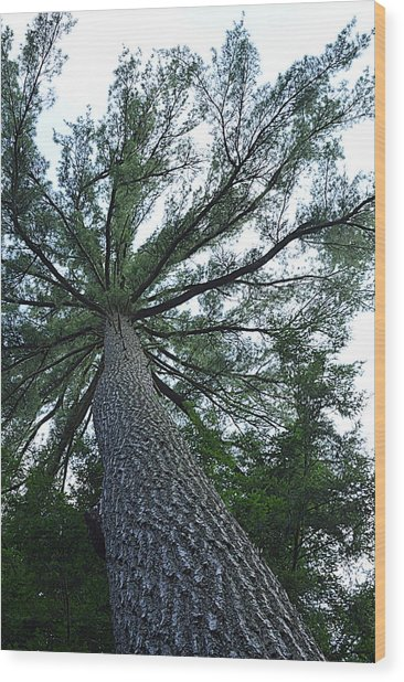 Towering Pine Wood Print
