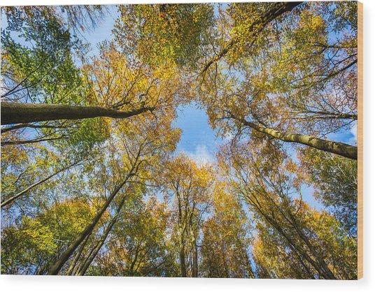 Towering Trees. Wood Print