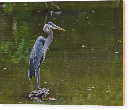 Towpath Heron Wood Print