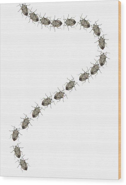 Trail Of Stink Bugs Wood Print