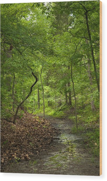 Trail Of Tears Mantle Rock Entrance Wood Print