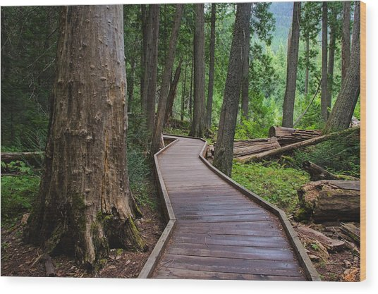 Trail Of The Cedars Wood Print