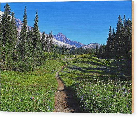 Trail To Mazama Ridge Wood Print