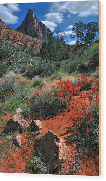 Trail To The Watchman Wood Print