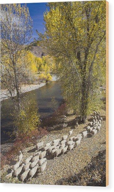 Trailing Of The Shep Wood Print