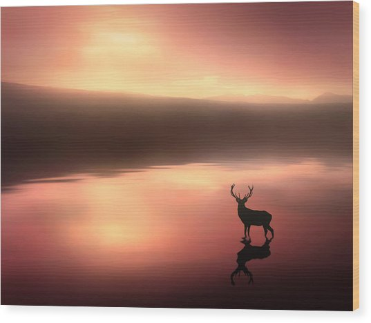 Tranquil Dawn Wood Print by Jennifer Woodward