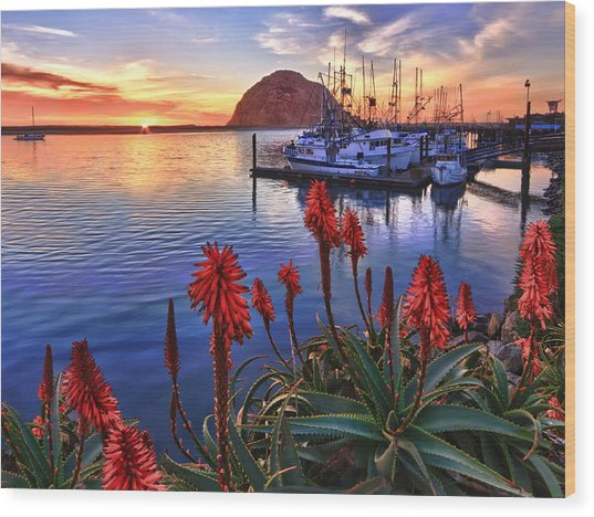 Tranquil Harbor Wood Print