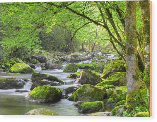 Tranquil Waters Wood Print by Mary Anne Baker