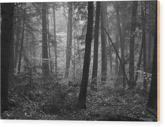 Tranquil Woods Wood Print by Eric Dewar