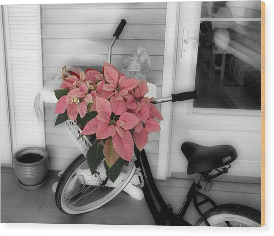 Traveling Poinsettia Wood Print