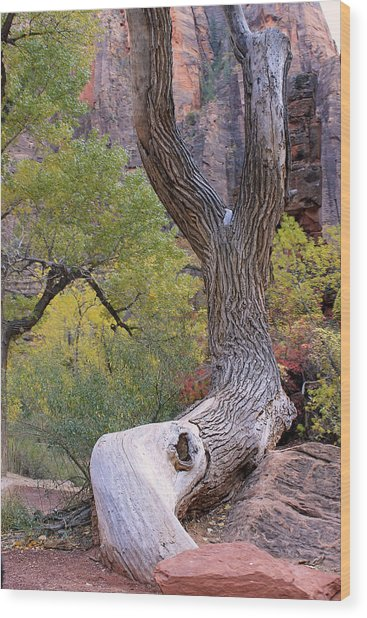 Tree @ Zion National Park Wood Print