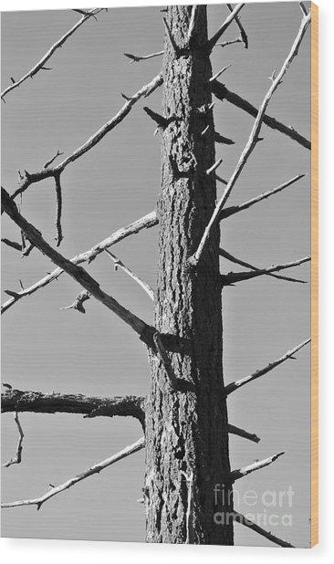 Tree Ancestor Wood Print