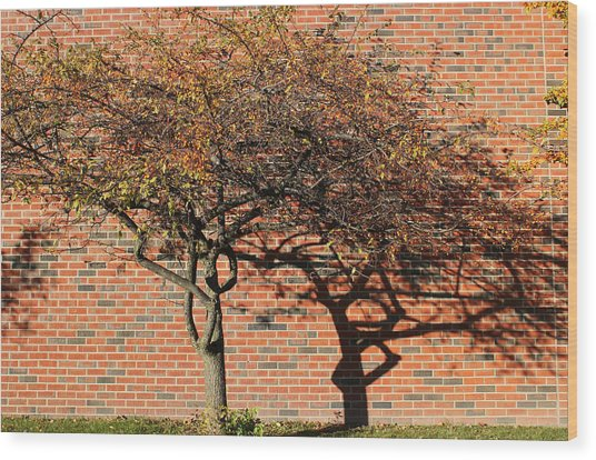 Tree And Shadow 1 Wood Print