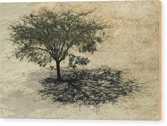 Tree And Shadow At Monte Alban Wood Print