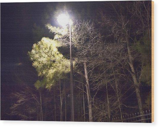 Tree And Streetlight  Wood Print