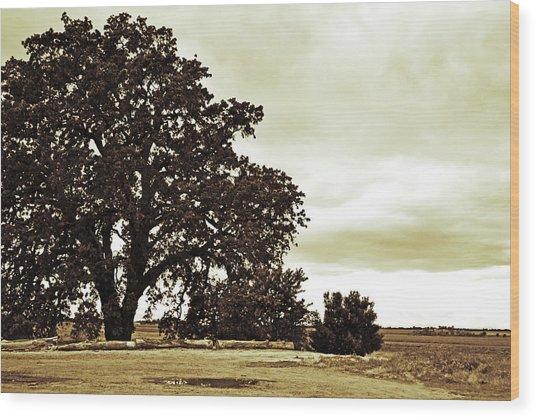 Tree At End Of Runway Wood Print