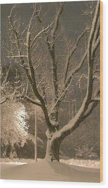 Tree At Night Wood Print