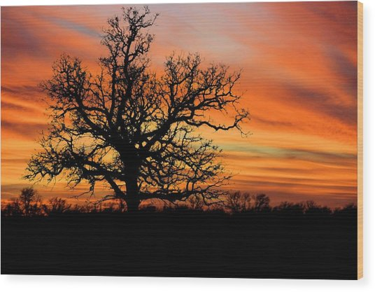 Tree At Sunset Wood Print